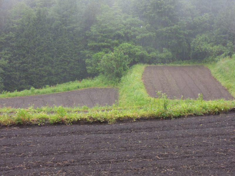 そばの段々畑