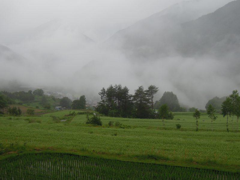 霧に煙るそば畑